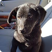 Adopt A Pet :: Pupah Noel - Huntsville, TN