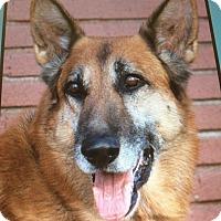 Adopt A Pet :: LEGEND VON LEON - Los Angeles, CA