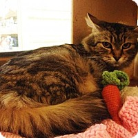 Adopt A Pet :: Amy - Richmond Hill, ON