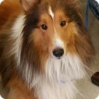 Adopt A Pet :: Gunner - Mission, KS