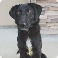 Adopt A Pet :: Den - Salt Lake City, UT