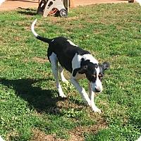 Adopt A Pet :: Jessie - Harrisville, WV