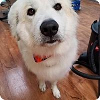 Adopt A Pet :: Tracer - Fargo, ND