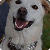 Adopt A Pet :: Casey - Alta Loma, CA