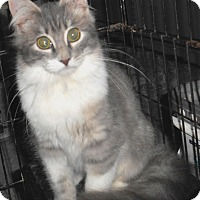 Adopt A Pet :: Ophelia - Chattanooga, TN