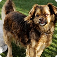 Adopt A Pet :: HERSHEY - Los Angeles, CA