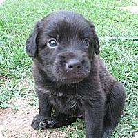 Adopt A Pet :: Baby Face - Salem, NH