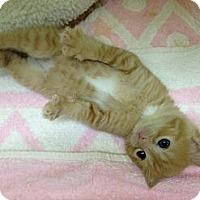 Adopt A Pet :: Nemo - Monroe, GA