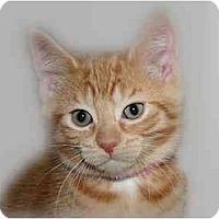 Adopt A Pet :: Oakley - Montgomery, IL