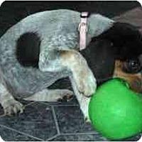 Adopt A Pet :: Inga - Novi, MI