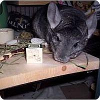 Adopt A Pet :: Layla - Avondale, LA