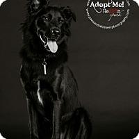 Adopt A Pet :: Bran - Bellevue, NE
