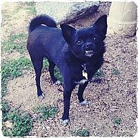 Adopt A Pet :: PIGLET - Tujunga, CA