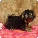 Adopt A Pet :: KENO