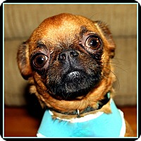 Adopt A Pet :: ROSY-POSY - ADOPTION PENDING - Seymour, MO