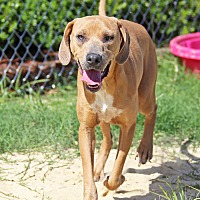 Adopt A Pet :: Sallie - Orange Lake, FL