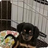 Adopt A Pet :: Little boy 3 - Pomerene, AZ