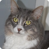 Adopt A Pet :: Chloe - North Branford, CT