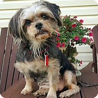 Adopt A Pet :: Mia - Toronto, ON