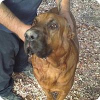 Adopt A Pet :: Buford - Pembroke, GA