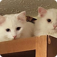Adopt A Pet :: Nigel and Arthur - Knoxville, TN