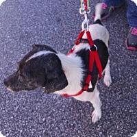 Adopt A Pet :: Silas - Greensboro, GA