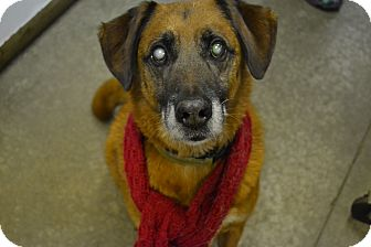 German Shepherd Dog Mix Dog for adoption in Lake Odessa, Michigan - Bradley