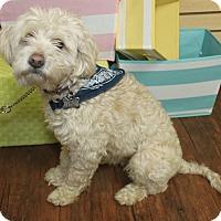 Adopt A Pet :: Cooper-Adopted! - Detroit, MI