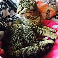 Adopt A Pet :: Key Lime - Addison, IL