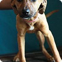 Adopt A Pet :: Mindy - Waldorf, MD