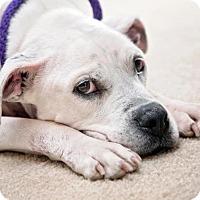 Adopt A Pet :: Kiwi - Enfield, CT