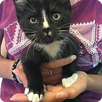 Adopt A Pet :: Luke - Menifee, CA