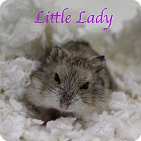 Adopt A Pet :: Little Lady - Bradenton, FL