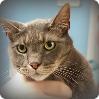Adopt A Pet :: Caterina - Glen Mills, PA