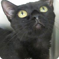 Adopt A Pet :: Jazzy - Jackson, NJ