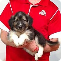 Adopt A Pet :: Calvin - Gahanna, OH