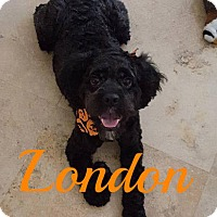 Adopt A Pet :: London - Maitland, FL