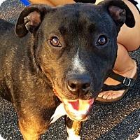 Adopt A Pet :: Zoey - Leesburg, VA