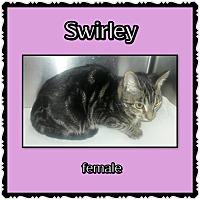 Adopt A Pet :: Swirley - Richmond, CA