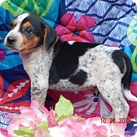 Adopt A Pet :: Zeke (5 lb) Video! - Sussex, NJ