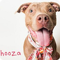 Pit Bull Terrier Dog for adoption in Sacramento, California - *WHOOZA
