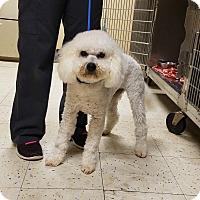 Adopt A Pet :: ROCKY - Gustine, CA