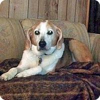 Adopt A Pet :: Gardenia - Waldorf, MD