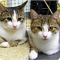 Adopt A Pet :: Lewis & Tippy - Alexandria, VA