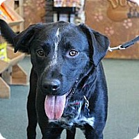 Adopt A Pet :: Luigi - Hastings, NY