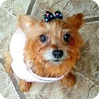 Adopt A Pet :: Cookie - North Port, FL