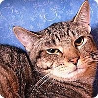 Adopt A Pet :: Duffy - Albany, NY