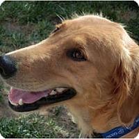 Adopt A Pet :: Lilly - Denver, CO