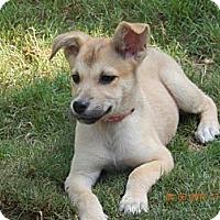 Adopt A Pet :: Marley - Dacula, GA