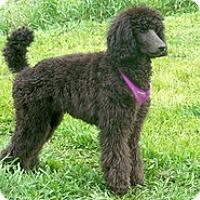 Adopt A Pet :: Mike - Spring City, TN